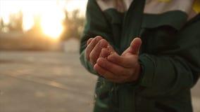 Chiuda sul colpo delle mani adulte dell'uomo dell'agricoltore che tengono il grano del grano alla luce calda del tramonto Il gran stock footage