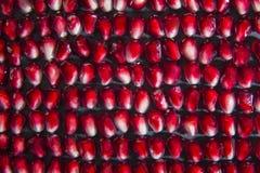 Chiuda sul colpo a macroistruzione dei semi del melograno Immagini Stock