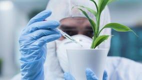 Chiuda sul colpo statico del biochimico nel suo luogo di lavoro che fa la prova sulle piante archivi video