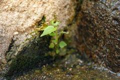 Chiuda sul crescere della pianta Fotografia Stock