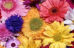 Chiuda sul dettaglio della disposizione dei fiori recisi immagine stock