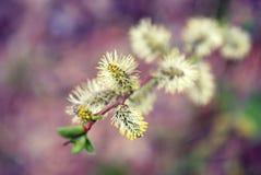 Chiuda sul fiore dell'albero Immagine Stock
