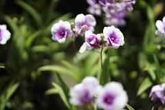 Chiuda sul fiore dell'orchidea nel giardino Fotografia Stock Libera da Diritti