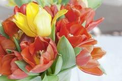 Chiuda sul fiore e sui fiori gialli e rossi del tulipano nel gardenm e nel giallo Fotografia Stock