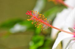 Chiuda sul fiore variopinto Immagini Stock Libere da Diritti