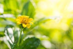 Chiuda sul fondo dei fiori Immagini Stock