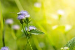 Chiuda sul fondo dei fiori Immagine Stock Libera da Diritti