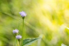 Chiuda sul fondo dei fiori Immagine Stock