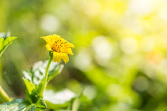 Chiuda sul fondo dei fiori Immagini Stock Libere da Diritti
