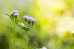 Chiuda sul fondo dei fiori Fotografie Stock Libere da Diritti
