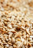 Chiuda - sul fondo dei semi di girasole con il fuoco selettivo fotografie stock libere da diritti