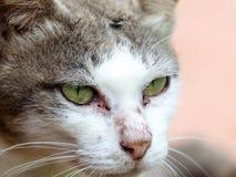 Chiuda sul fronte del gatto Immagini Stock
