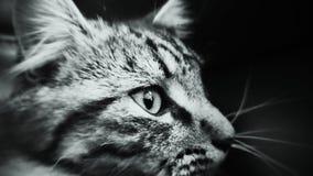 Chiuda sul gatto Fotografia Stock