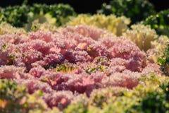 Chiuda sul giacimento di fiore Immagine Stock