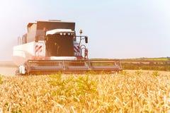 Chiuda sul lavoro di una mietitrebbiatrice su un giacimento di grano un giorno soleggiato Immagine Stock