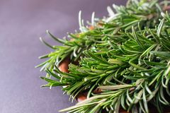 Chiuda sul macro colpo dell'erba verde fresca dei rosmarini fotografia stock