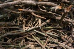 Chiuda sul mucchio dei rami di albero Immagine Stock Libera da Diritti