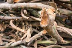 Chiuda sul mucchio dei rami di albero Immagine Stock