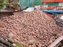 chiuda sul mucchio delle patate fuori dell'agricoltura della casa dell'azienda agricola Fotografia Stock