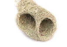 Chiuda sul nido dell'uccello del tessitore di Baya Fotografia Stock Libera da Diritti