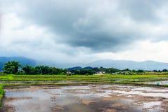 Chiuda sul nuovo campo di risaia nel Nord della Tailandia Fotografie Stock Libere da Diritti