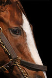 Chiuda sul particolare del fronte del cavallo di corsa Immagini Stock