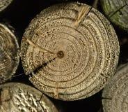Chiuda sul particolare di legno veduto Immagine Stock Libera da Diritti