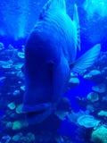 Chiuda sul pesce in acquario Fotografie Stock Libere da Diritti