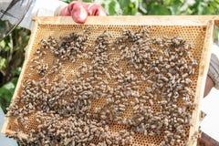 Chiuda sul punto di vista degli api di funzionamento sui honeycells Fotografie Stock Libere da Diritti