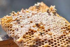 Chiuda sul punto di vista degli api di funzionamento sui honeycells immagine stock