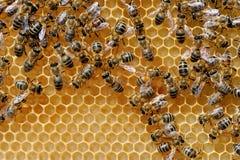Chiuda sul punto di vista delle api di lavoro Immagine Stock Libera da Diritti
