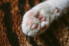 Chiuda sul punto di vista di un gatto del gattino di Yong che mostra i suoi cuscinetti rosa della zampa fotografia stock libera da diritti