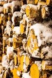 Chiuda sul verticale di legname Fotografia Stock