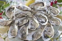 Chiuda sull'immagine dell'ostrica e Natale vischio e ramo dell'agrifoglio immagini stock