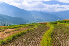 Chiuda sull'immagine di un giacimento del riso in Punakha, Bhutan Fotografie Stock Libere da Diritti