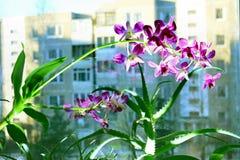 Chiuda sull'immagine di un'orchidea e di un aloe su un fondo della città Fotografia Stock