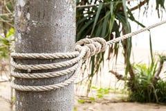 Chiuda sulla corda legata intorno ad un tronco di albero davanti a sfondo naturale vago fotografie stock libere da diritti