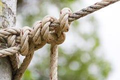 Chiuda sulla corda legata intorno ad un tronco di albero davanti a sfondo naturale vago fotografie stock