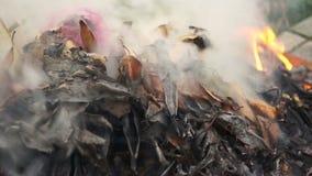 Chiuda sulla cottura della combustione del fuoco del cespuglio video d archivio