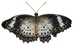 Chiuda sulla farfalla Fotografie Stock Libere da Diritti