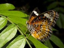 Chiuda sulla farfalla 22 Fotografia Stock