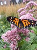 Chiuda sulla farfalla Fotografie Stock