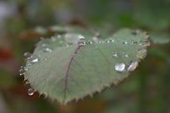 Chiuda sulla foglia e sulle gocce di pioggia fotografie stock