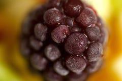 Chiuda sulla foto dell'insalata di frutta del mirtillo Immagini Stock