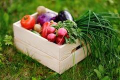 Chiuda sulla foto della cassa di legno con le verdure organiche fresche dall'azienda agricola Fotografia Stock