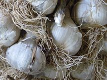 Chiuda sulla macro delle lampadine dell'aglio Fotografia Stock