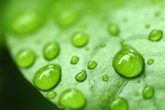 Chiuda sulla macro goccia di acqua del colpo su è aumentato Fotografia Stock