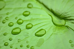 Chiuda sulla macro goccia di acqua eccellente del colpo sulla foglia e sul fiore Fotografia Stock