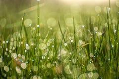 Chiuda sulla macro immagine di erba verde chiaro luminosa che cresce sul fondo verde vago del bokeh sulla mattina soleggiata dell Immagini Stock Libere da Diritti