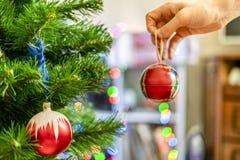 Chiuda sulla mano che decora l'albero di chrismas con il bello giocattolo rosso f della palla fotografie stock libere da diritti